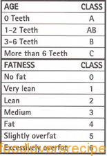 vleis gradering 2